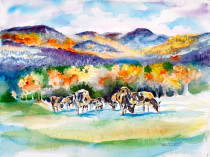 Colorful Cows of Vermont